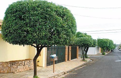 Como funciona a arborização urbana? Confira 15 árvores ideais para grandes cidades