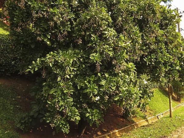 Conheça as 18 árvores nativas brasileiras mais importantes (e incríveis!)