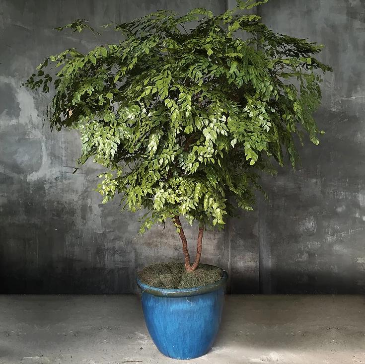 Plantas preservadas: tudo o que você precisa saber para ter um jardim lindo e duradouro!